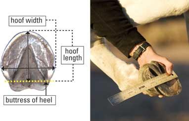 Measure for hoof boots