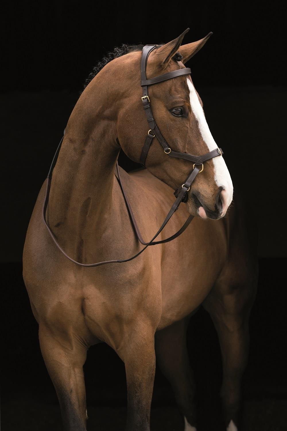 Bitless Bridles, sidepull bridle, cross under bridle, dr