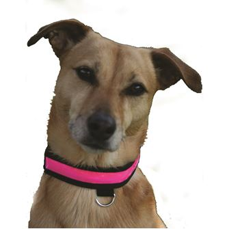 Equisafety Flashing Dog Collar (Medium)