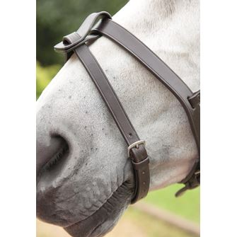 Shires Blenheim Flash Strap