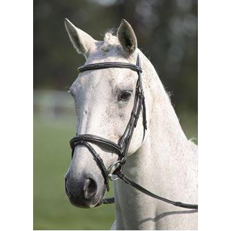Shires Avignon Padded Raised Flash Bridle