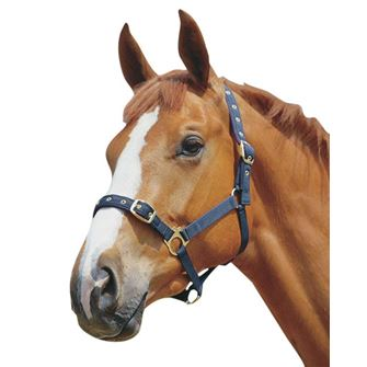 Roma Soft Back Headcollar