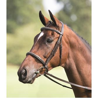 Shires Avignon Padded Raised Cavesson Bridle