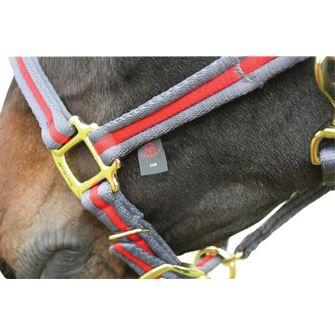 Aerborn Cushion Web Headcollar