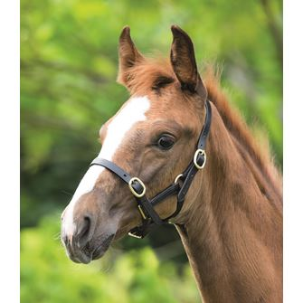 Shires Blenheim Adjustable Leather Young Racehorse Headcollar