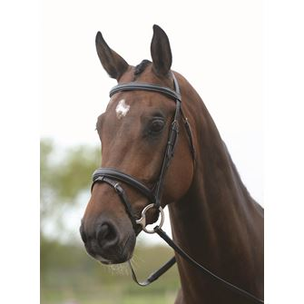 Kincade Flash Bridle with Reins