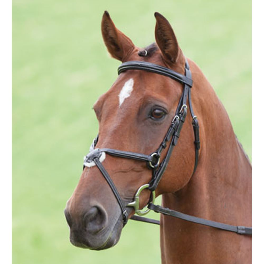 Shires Salisbury Brackley Grackle Bridle