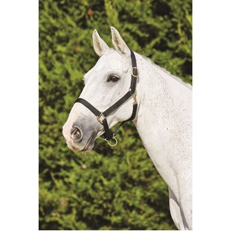 Kincade Webbed Headcollar with Leather Crown