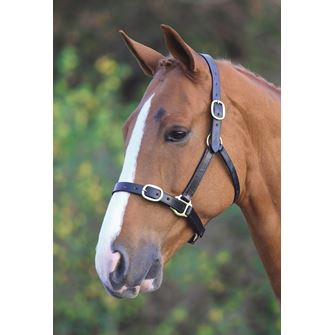 Shires Blenheim Fully Adjustable Leather Headcollar