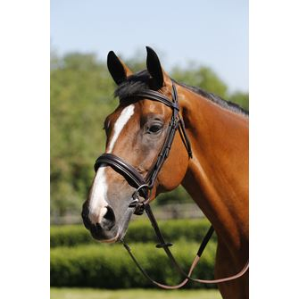 Mark Todd Padded Cavesson Bridle with Reins