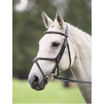 Shires Avignon Grackle Bridle