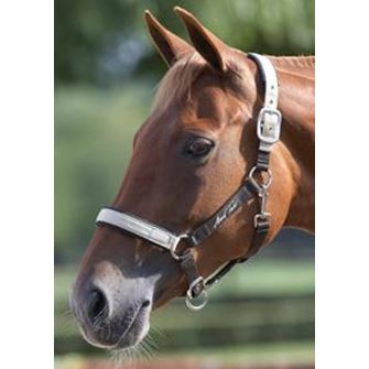 Mark Todd Headcollar