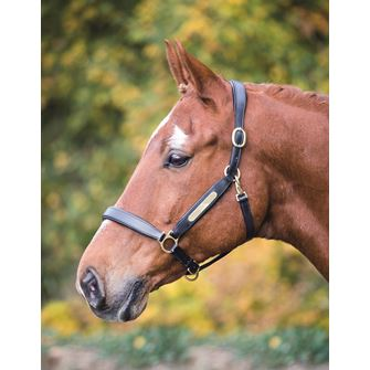 Shires Aviemore Leather Nameplate Headcollar