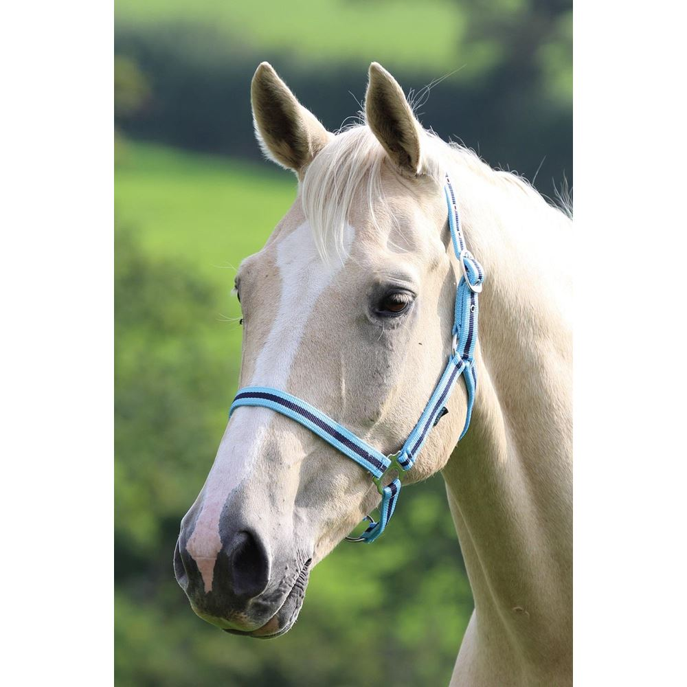 Shires Wessex Nylon Headcollar