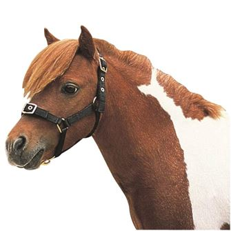 Roma Mini Nylon Headcollar