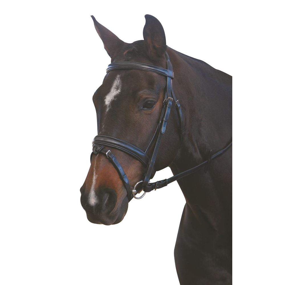 New Kincade Padded Headpiece Flash Bridle with Reins