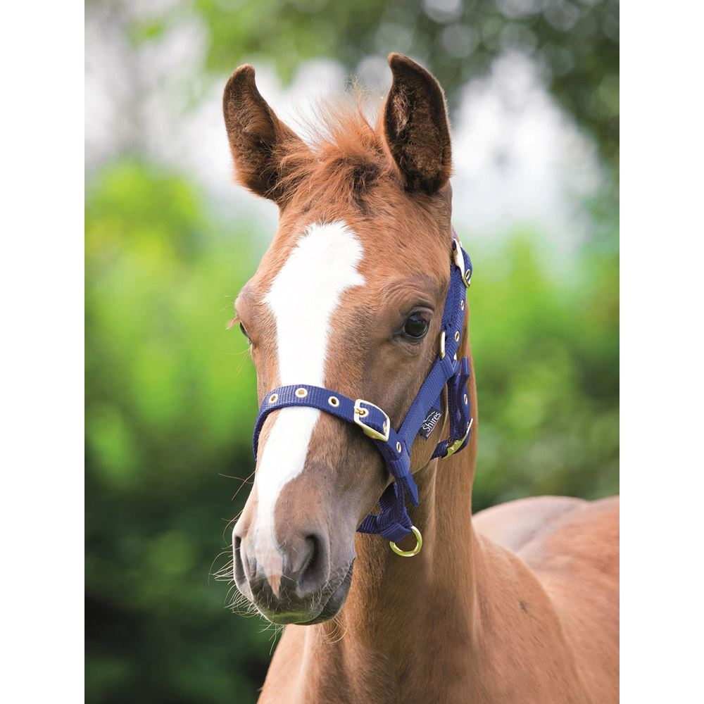 Shires Foal Fully Adjustable Nylon Headcollar