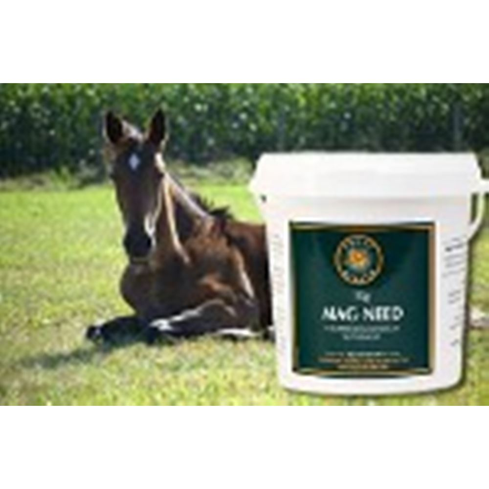 Equus Health Mag- Need Magnesium Supplement for Horses 2Kg