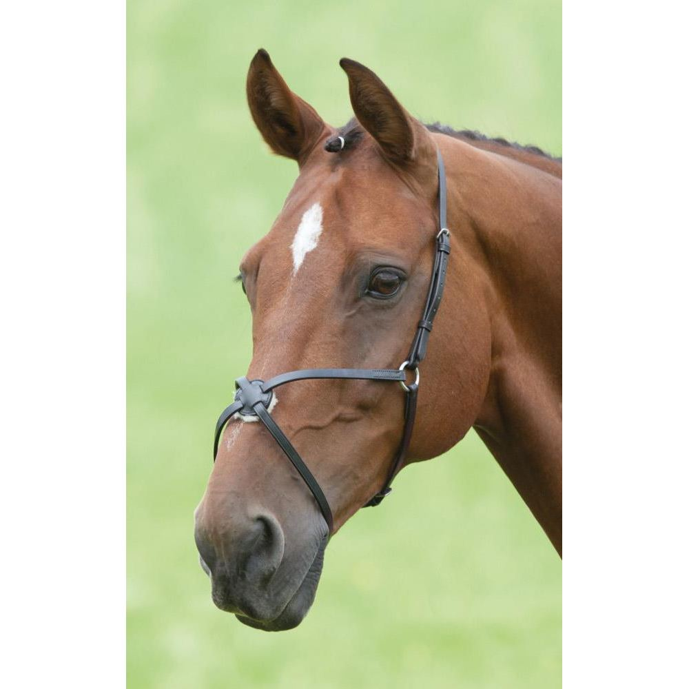 Shires Blenheim Mexican Grackle Noseband