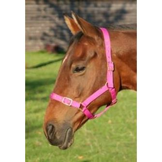 JHL Orion Headcollar