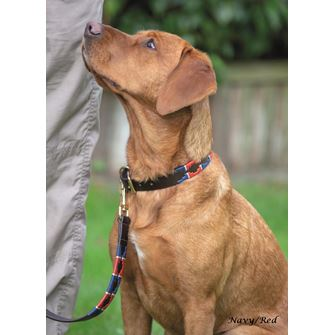 Shires Digby & Fox Drover Polo Dog Collar, M - XXL