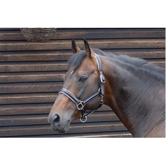 Caldene Leather Padded Headcollar