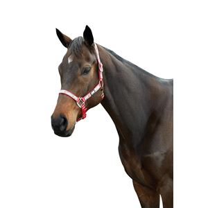 Roma Reflective Ribbon Headcollar