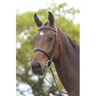 Kincade Raised Cavesson Bridle with Reins