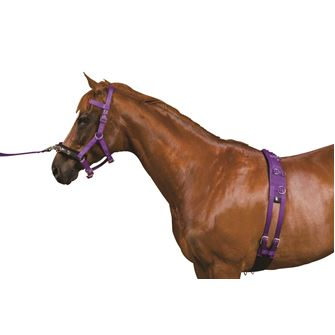Kincade Equigrip Lunge Kit