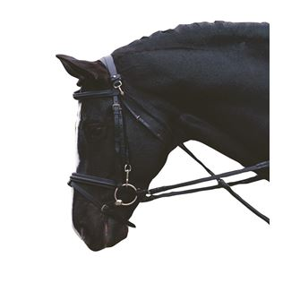 Horse Lunging Training Aids