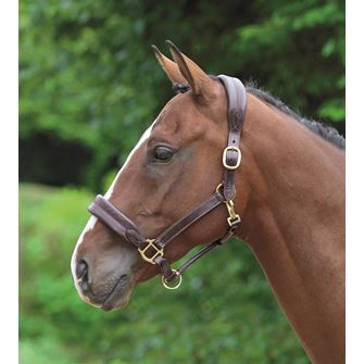 Shires Blenheim Leather Cushioned Travel Headcollar
